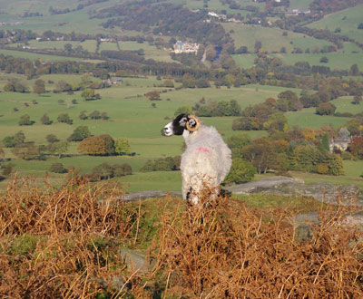 Sheep farming country in the Yorkshire Dales
