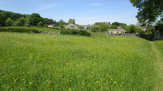 wild flower meadow west witton yorkshire dales